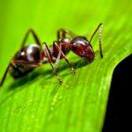 راه های از بین رفتن مورچه درون گلدان